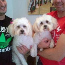 these two 4,5yr old maltese, brother & sister (neuted/spayed) and inoculated, need a home. Awesome dogs. call 083 994 6389