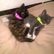 2 X 7week old kittens are up for adoption and free to a good home. contact 074 402 3855